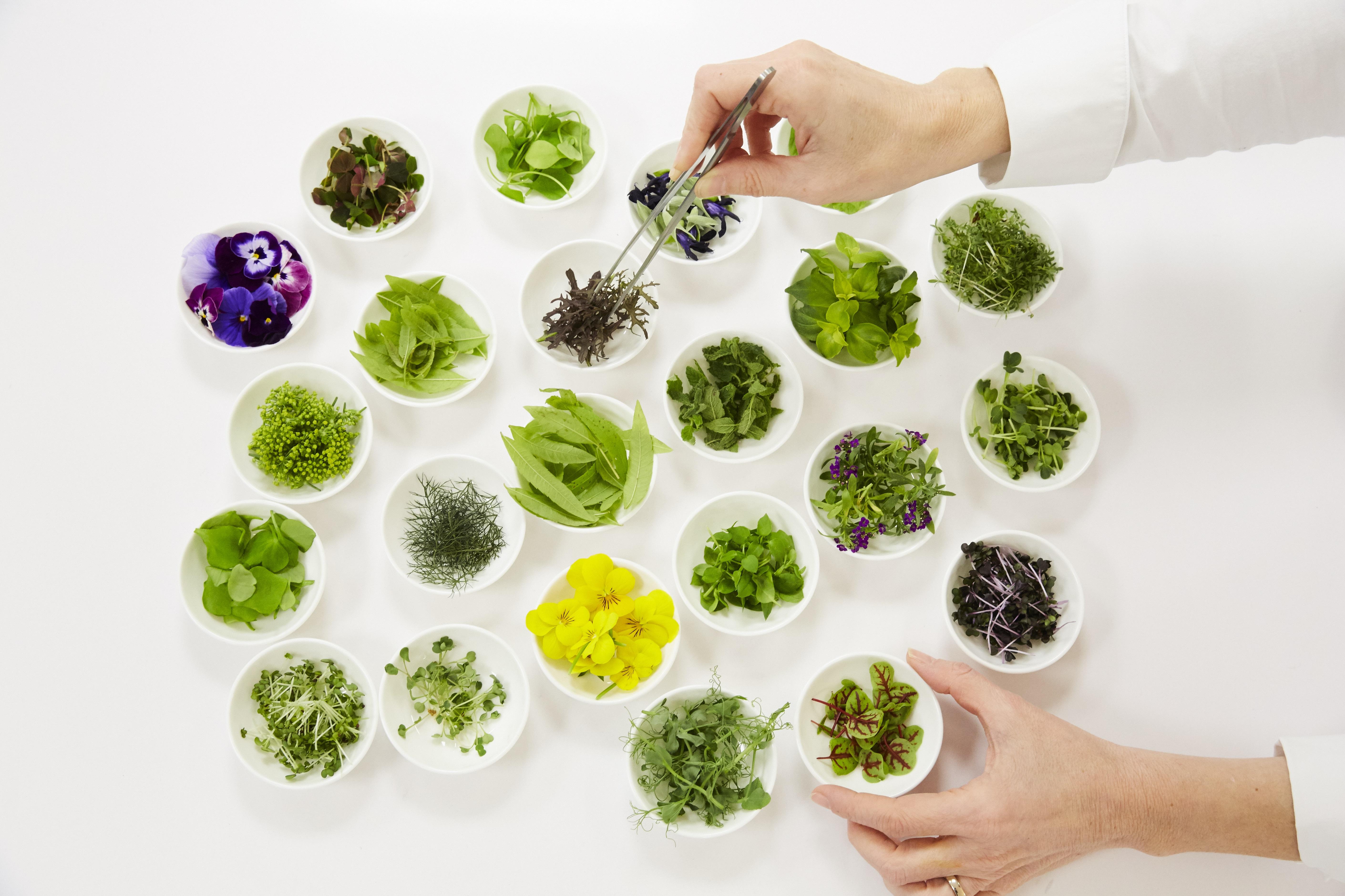 LDDPL Herbs